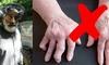 Včely mohou zastavit artritidu