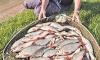Rekordní úlovky. Ryby braly
